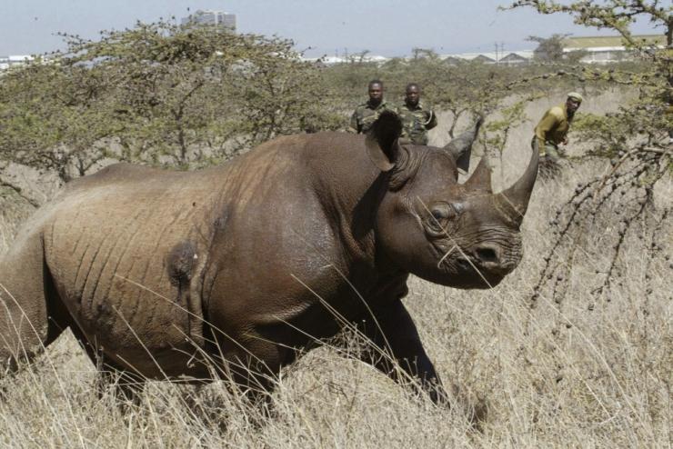 WWF: Selgroogsete liikide arv vähenes 44 aastaga 60 protsenti