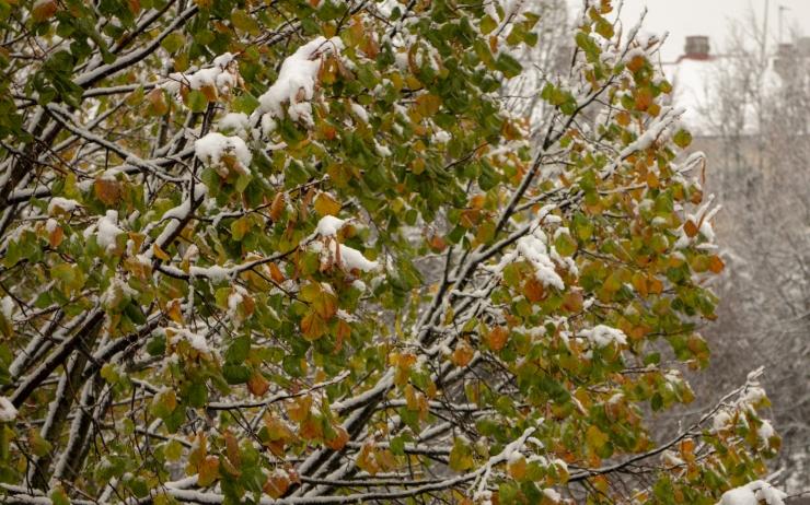 Ilmateenistus prognoosib: novembris veel talveks ei lähe