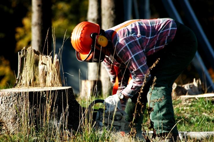 Riigi keskkonnaamet: metsi raiuvate arendajate surve ei puutu meisse