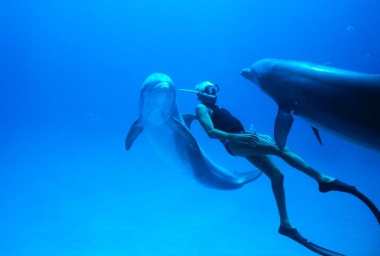 TASUTA! Delfiinimees lõpetab Kumu filmihooaja