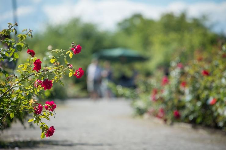 """Botaanikaaed kutsub aasta viimasele näitusele """"Lõikelilli laiast maailmast"""""""
