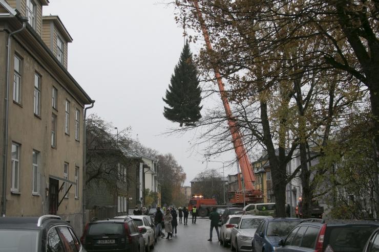 FOTOD! Kibuvitsa tänaval nähti jõulukuuske majade vahel hõljumas