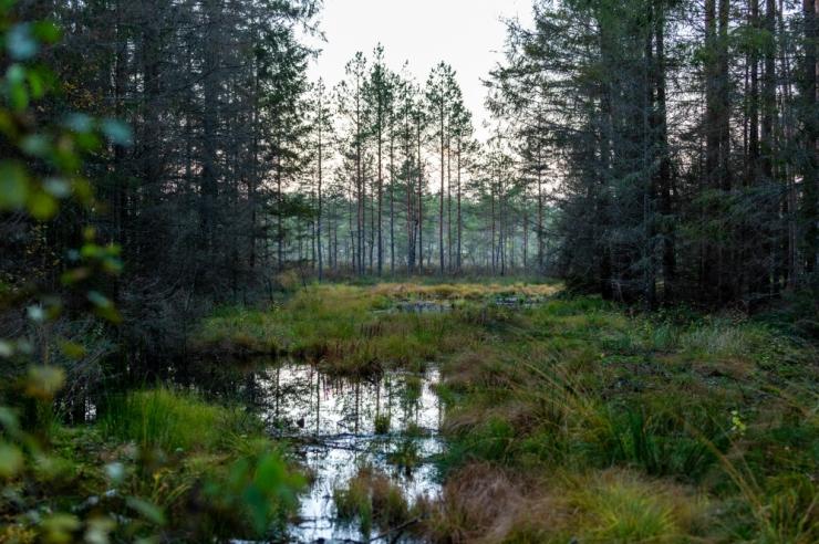 Eesti saab kuuenda rahvuspargi