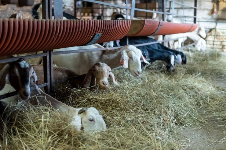 Loomade raviks kasutatavate antibiootikumide müük Euroopas väheneb