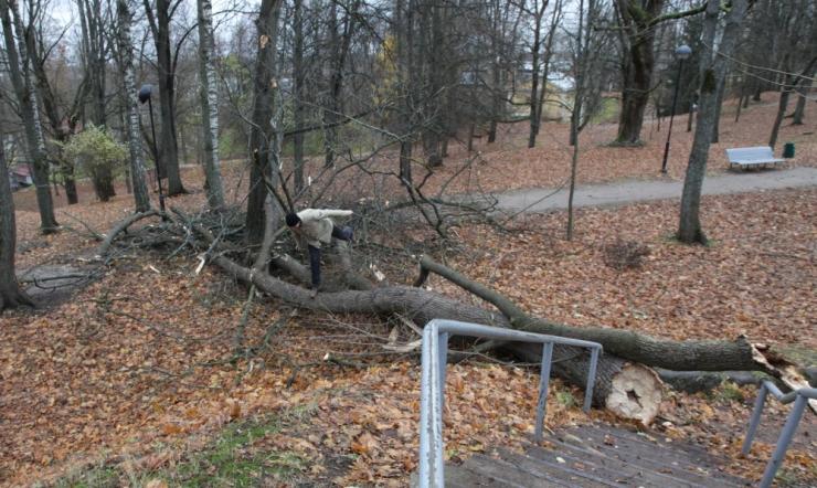 Tugev tuul võib teedele puid langetada