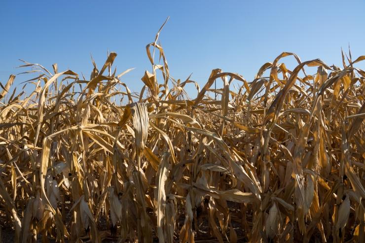 ÜRO: Kliimamuutus ohustab toidujulgeolekut