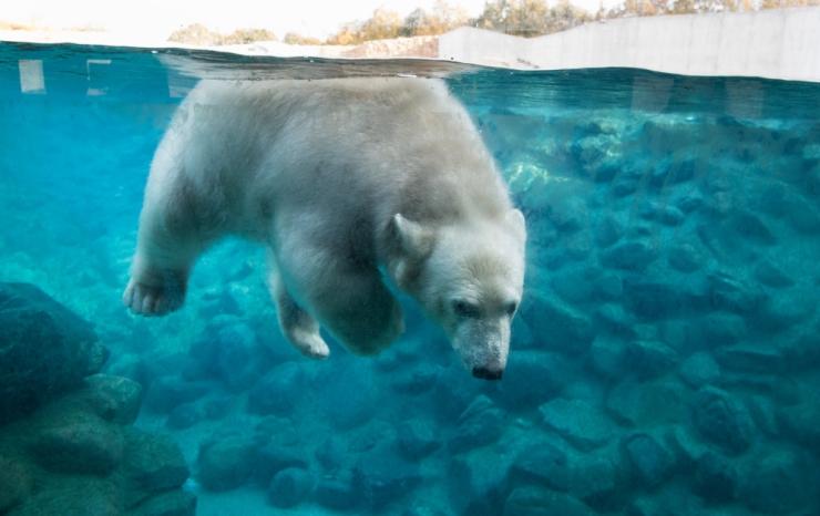 Jääkarupoeg Aron tähistas teist sünnipäeva