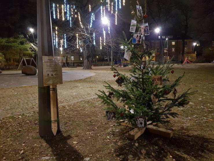 Üliõpilased aitavad varjupaigaloomadele jõuluks uue kodu leida