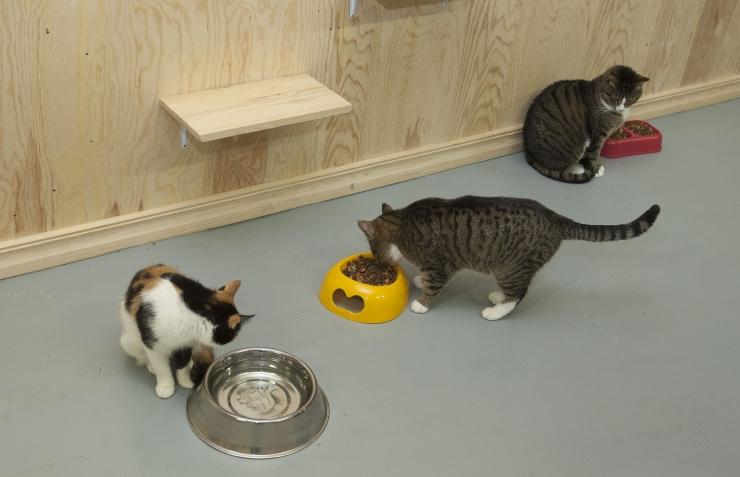 Loomakaitseorganisatsioonid taunivad Paljassaare varjupaiga vastast laimukampaaniat