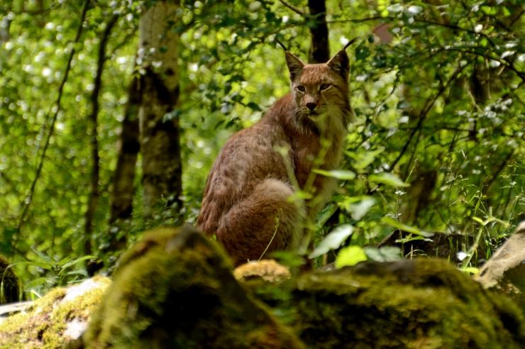 Eesti liitus kliimasõbraliku metsanduse deklaratsiooniga