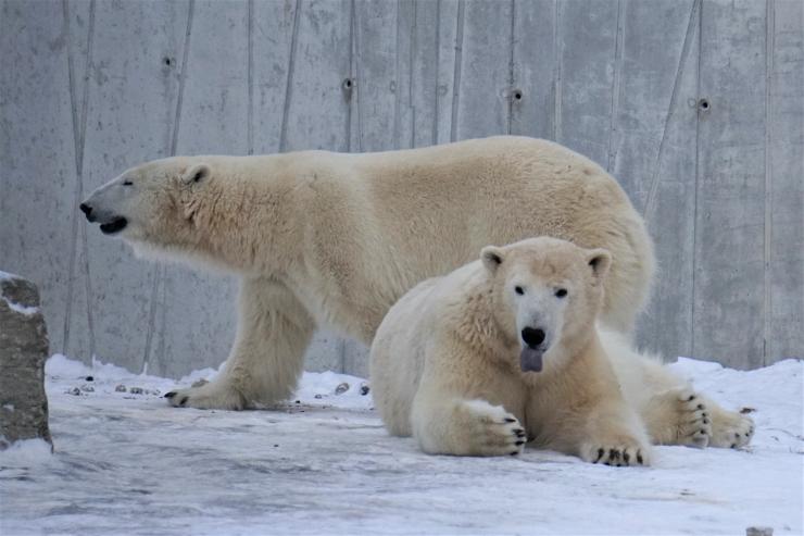 Eelmisel aastal külastas loomaaeda 430 000 uudistajat