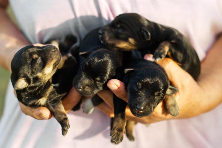 Eesti Loomakaitse Selts kutsub vabatahtlikke ühinema