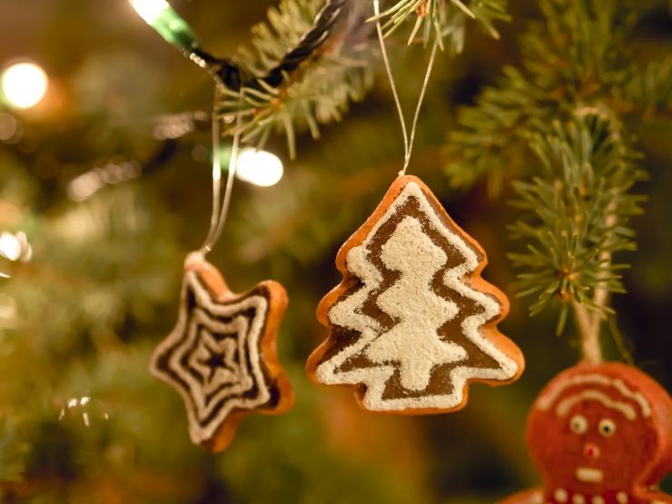 Põhja-Tallinna valitsus paigaldas lisakonteinerid jõulukuuskede kogumiseks