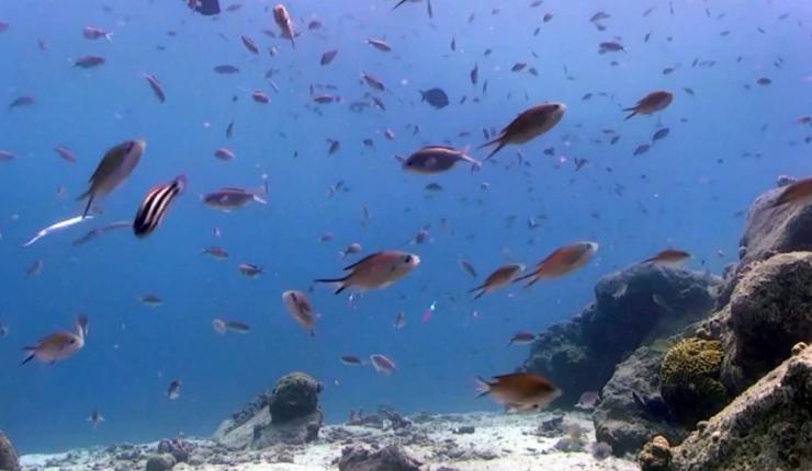 Uuring: maailma ookeanid soojenevad kiirenevas tempos