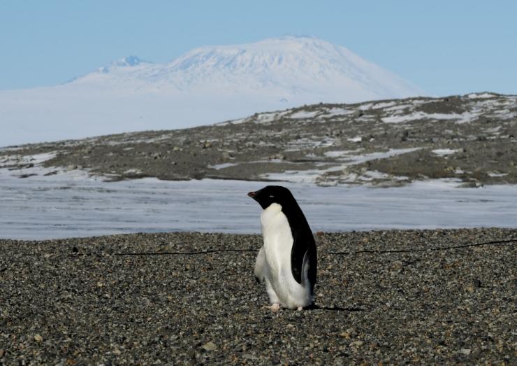 Antarktikas sulab praegu kuus korda rohkem jääd kui 40 aastat tagasi