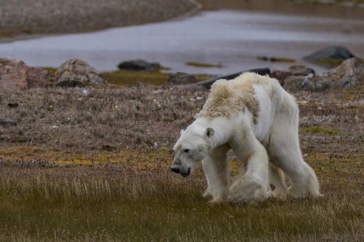 Maailm ilmselt kaotab parima võimaluse vältida haldamatut kliimamuutust