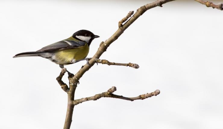 Valvsad linnuvaatlejad tuvastasid üle 55 000 linnu