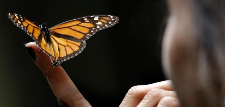UUENDUSFOORUM: Kas putukate söömine päästab maailma?
