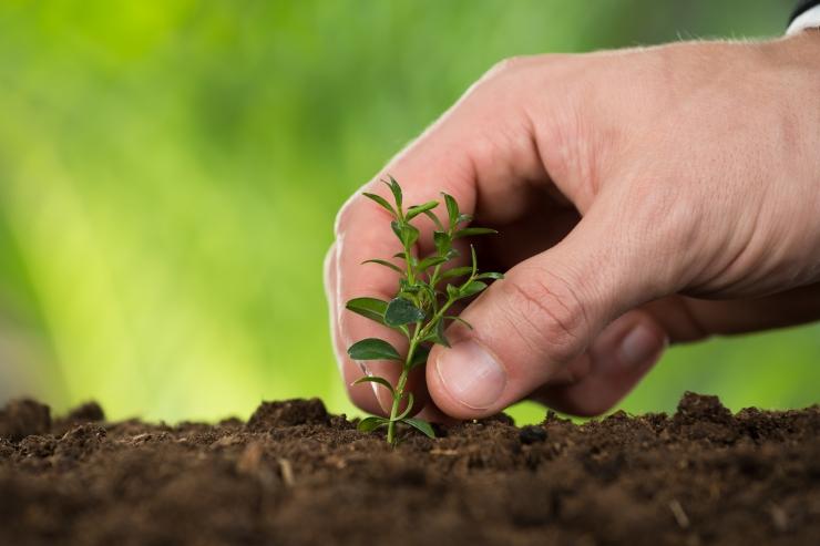 Erakondade keskkonnalubadustes on esikohal metsanduse areng ja kliima