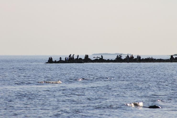 Tallinna Keskkonnaamet avaldas teabebrošüüri ohtudest Soome lahele