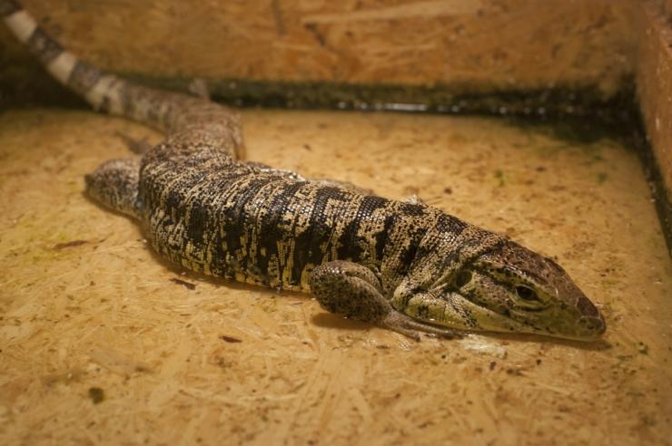 Eelajaloolised krokodillid ja linnud olid pesakaaslased