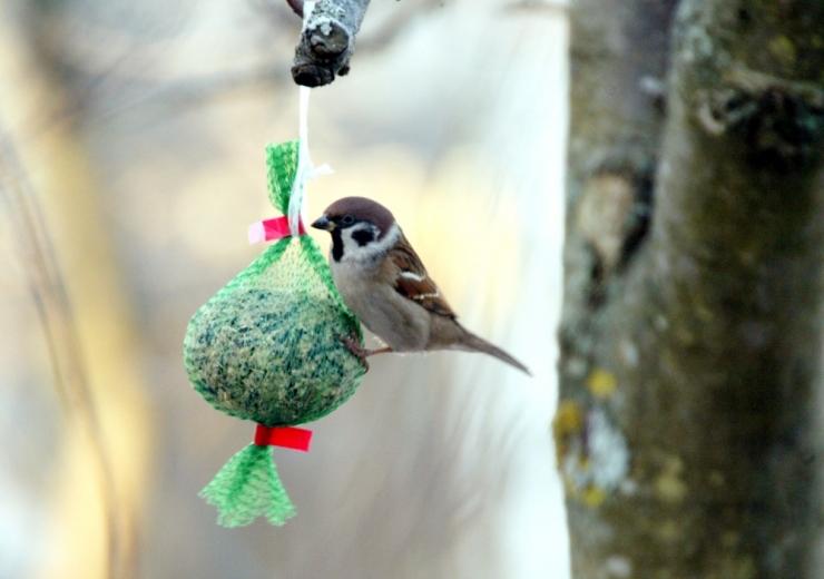 Ornitoloogiaühing kutsub aiapidajaid veebipäevikut pidama