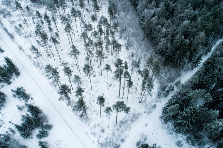 Keskkonnaühendused andsid puiduenergia toetusskeemi Euroopa Kohtusse