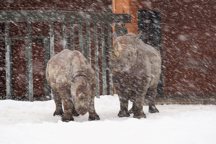 Heitlikud kevadilmad loomaia elanike elu ei sega