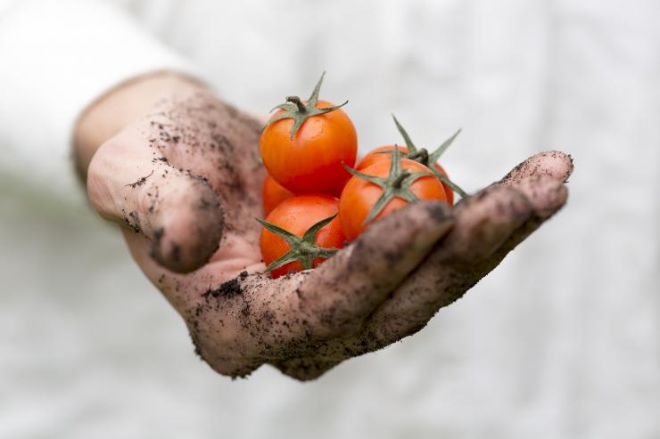 Kolmikliit kinnitas Eesti põllumeeste ja kohaliku toidu tootmise toetamist