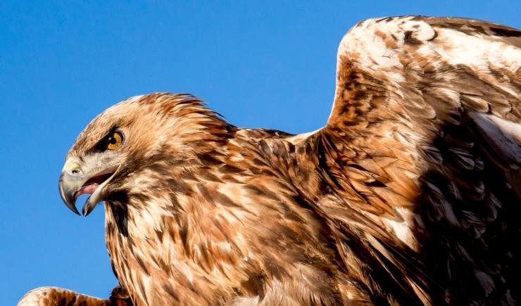 Amet: lindude pesitsusperioodiks peavad olema metsatööd tehtud