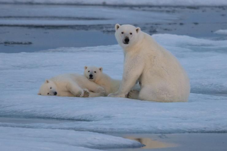 Kanada kliima soojeneb muust maailmast kaks korda kiiremini