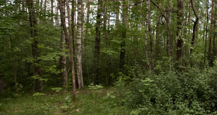 Harku metsa kaitseala materjalidega saab tutvuda kuu lõpuni