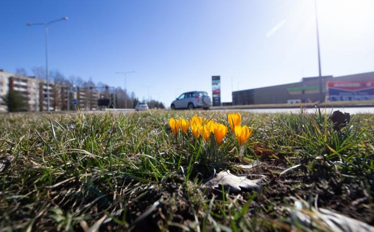 Ilmateenistus prognoosib keskmisest soojemat aprilli