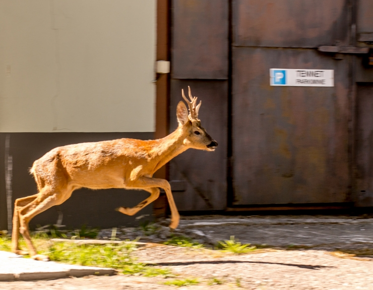 Teele jooksvaid loomi hakkavad jahtima radarid
