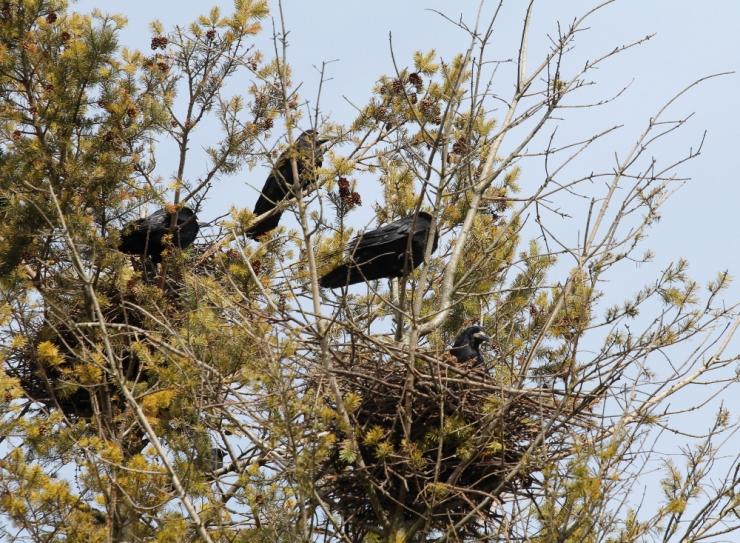 Kodanikuühendused: lindude pesitsusajal ei tohiks metsa teha