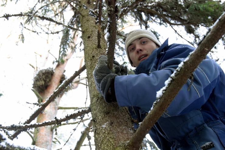 Ekspert: raierahu on vajalik, metsa mahavõtmise võimekus on suurem kui tagasi istutamine