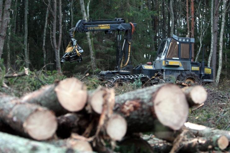 Vastulause: raierahu ajal saab metsandussektor keskenduda istutustöödele