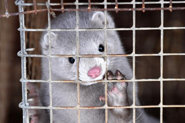 Norra keelab karusloomafarmid aastaks 2025