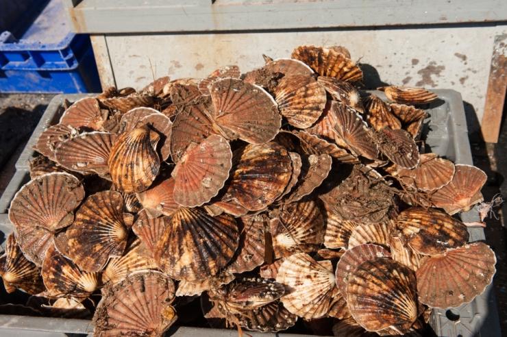 Karbikasvatused aitavad Läänemerd puhastada