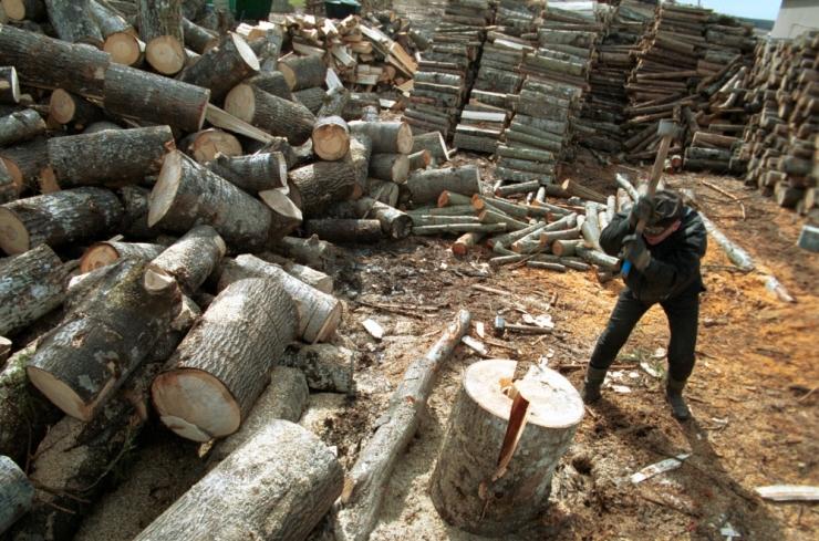 METSAEKSPERT: Möödunud aastal raiuti Eestis rekordilised 12,5 miljonit tihumeetrit metsa