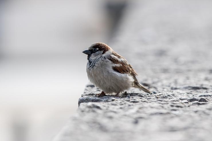 Pärast kevadpüha kutsub loomaaed linnulaulu kuulama