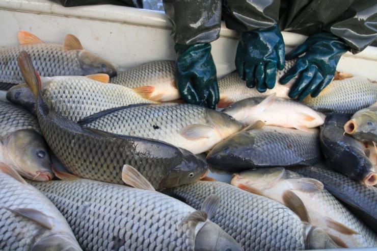 MKM ühines veeteede ameti kriitikaga Pakri kalakasvatuse plaanile