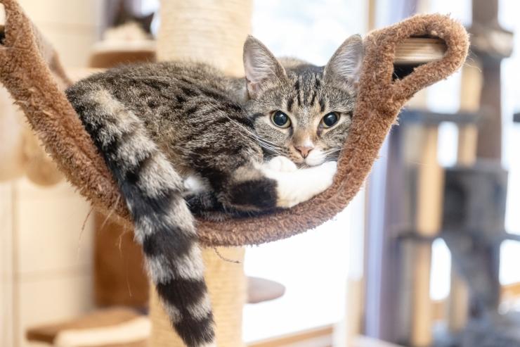 Kolme omavalitsuse vaesed saavad oma kassi odavalt steriliseerida