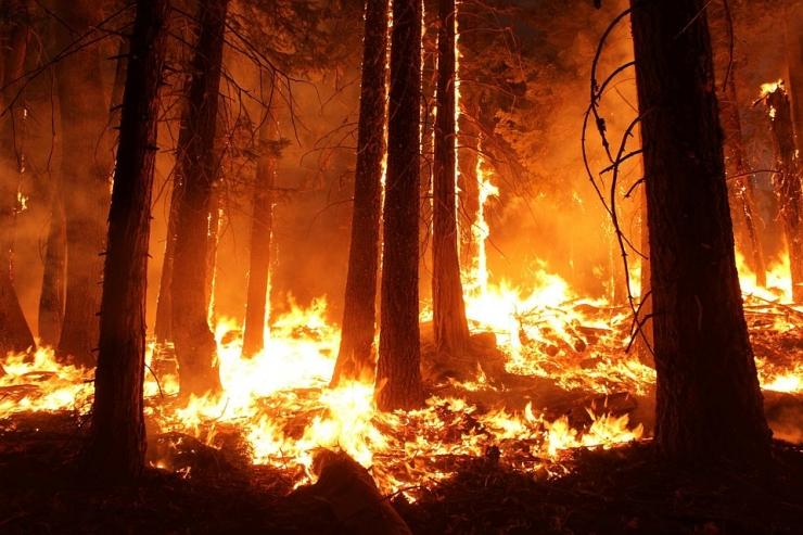 Aprill purustas metsa- ja maastikupõlengute rekordid