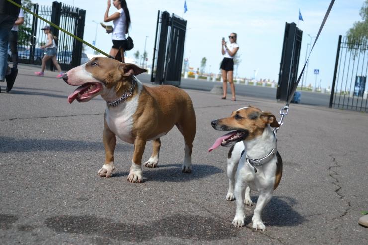 GALERII! Loomasõbrad marssisid Pirita promenaadil