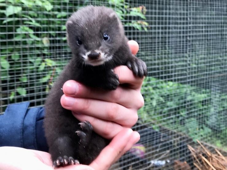 Uudiseid naaritsatest ja kaslastest loomaaias