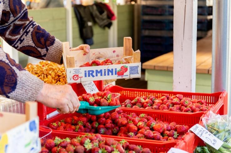 VIDEO! Sotsiaalminister Kiik Eesti maasikatest: Eesti toit on puhas ja selle kvaliteet on kõrge
