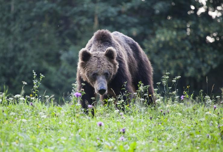 Päästjad hirmutasid karu taluhoovist metsa