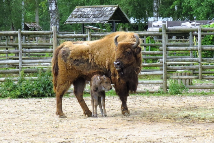 Uued elanikud loomaaias