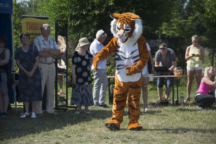 FOTOD JA VIDEO! Tiigripäev loomaaias tõi kokku tiigrisõbrad